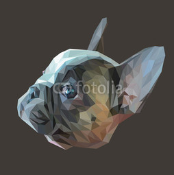 Francuski bulldog low poly